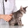 Ветеринарные клиники в Александро-Невском